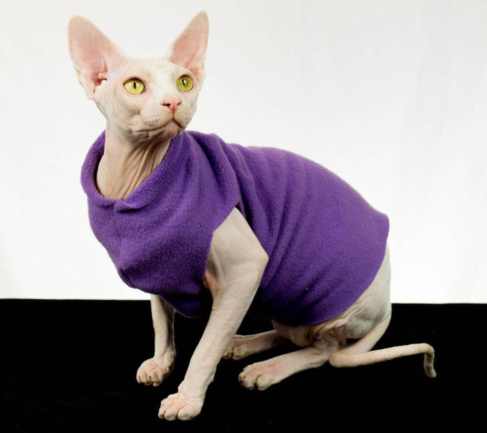 kitty1-.jpg