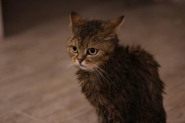 Витамины для кошек для улучшения состояния шерсти