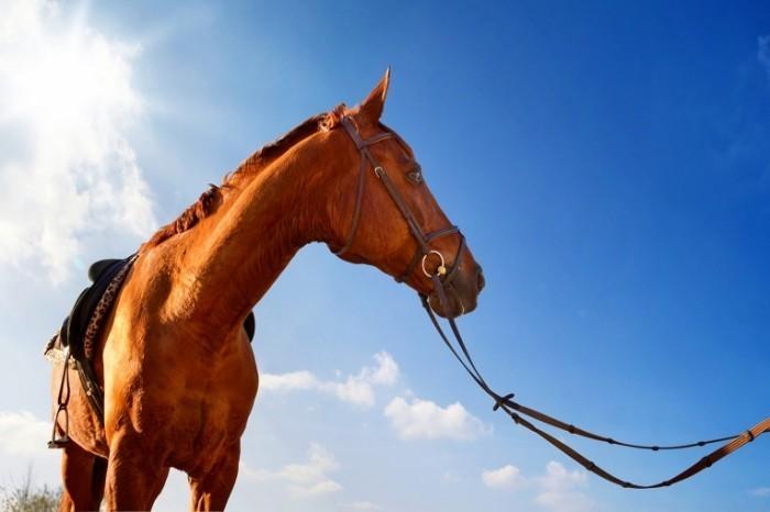 лёгочные паразиты у лошадей