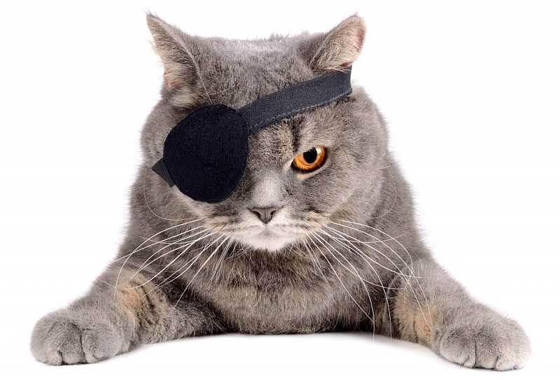 Признаки и лечение кератита у собак и кошек