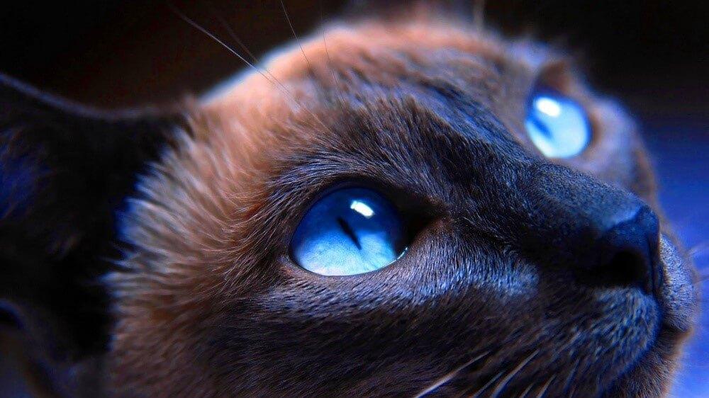 Интересные факты о кошачьем зрении