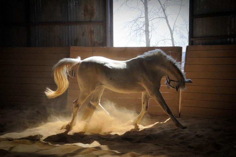 Уход за лошадью до и после тренировки