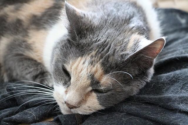 какие витамины для старых кошек thumbnail