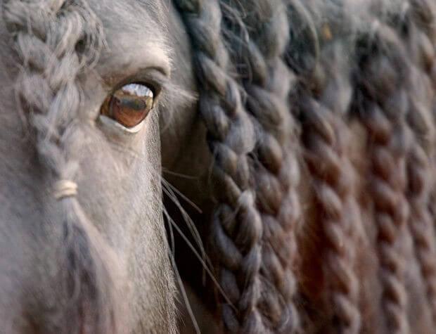 Как заплести лошади косички