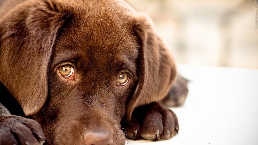Проблемы пищеварения у собаки
